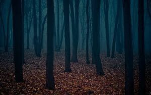A Tale for Halloween, dark forest